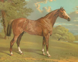Cassells Thoroughbred I
