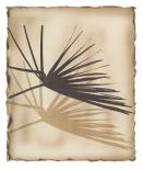 Tropic Palm 1