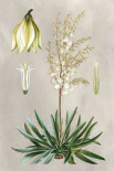 Tropical Varieties I