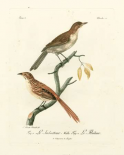 Antique French Birds I