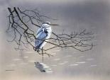 Birdy I