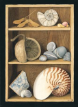 Shells on Shelves