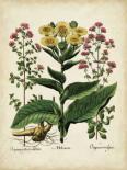 Besler Florilegium I