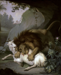A Lion Attacking a Goat